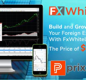 Planning-to-start-Forex-Brokerage-at-low-cost-fxwhitelabel.net-can-be-your-best-option
