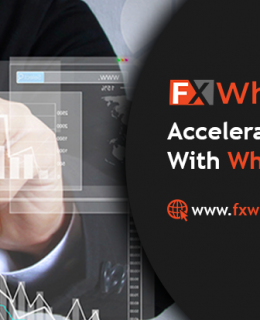 Accelerate Your Growth With White Label Solutions: