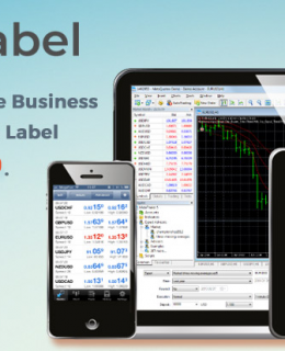 Start your Forex Brokerage Business Today